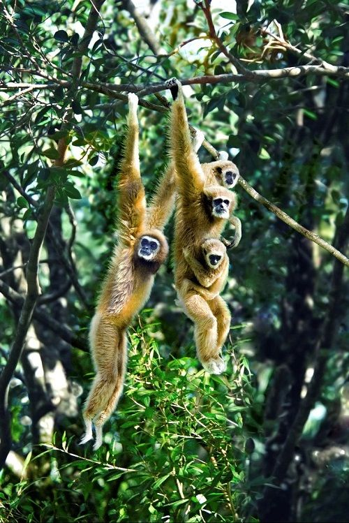 Malaysia's forests are a key environmental asset, contributing to climatic stability and sustaining an astonishing spectrum of wildlife and plant species.