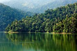 Safeguarding Malaysia's rich rainforests