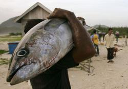Talks start to protect Indian Ocean's depleting tuna