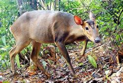 Globally threatened wildlife species recorded in Laos national park