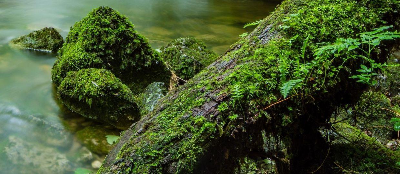 Java Moss in a river. — David Thomas