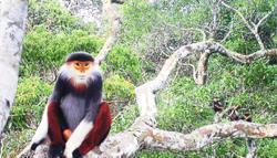 Park records 36 threatened species