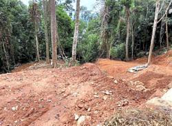 Rafflesia sanctuary in Tasik Kenyir destroyed