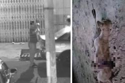 Pictures of stray dog killed with bow and arrow in Alor Setar go viral, group calls for action