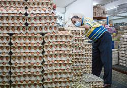 Samples taken from farms in recalled eggs probe