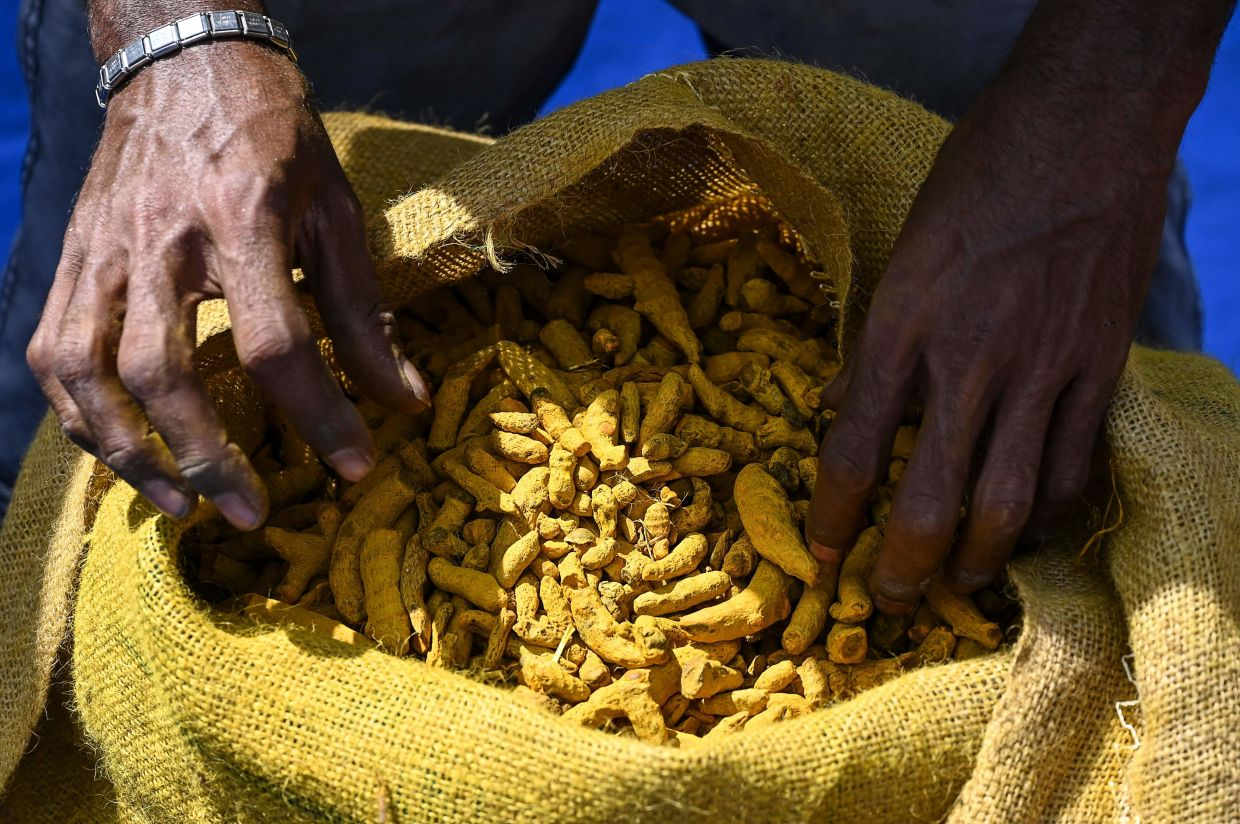 Turmeric has been gaining a fair bit of popularity during the Covid-19 due to its medicinal benefits. Photo: AFP/Lakruwan Wanniarachchi