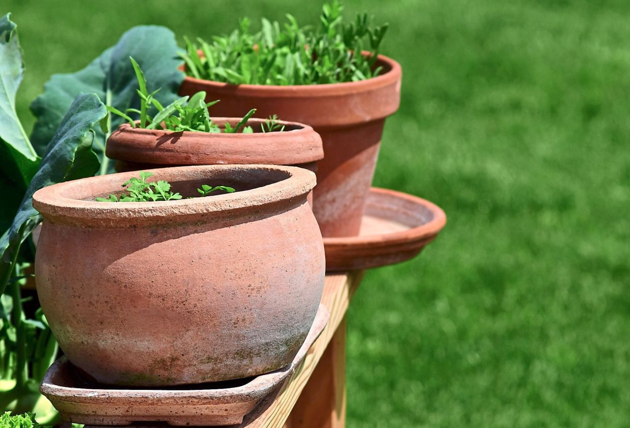 Herbs that get six hours of direct afternoon sun must be watered twice a day. Photo: Ulrike Leone/Pixabay