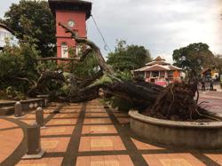 Iconic tree at Melaka's Red Square uprooted during heavy rain