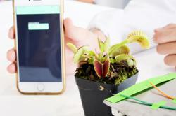 Plants can communicate with humans, move, and more through electrical signals