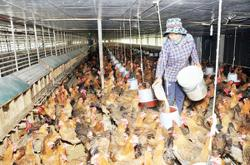 Vietnam farmers hit hard by rise in animal feed prices