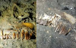 Fossil teeth in Gua Matsoorat found damaged after video crew visits cave