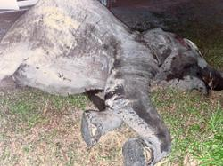 Female elephant killed in chain collision