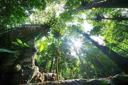 Addressing the issues plaguing Malaysia's forests