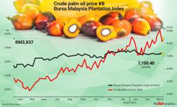 Palm oil small caps reigning supreme