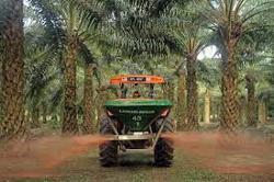 Boustead Plantations Q4 net profit climbs for a third straight quarter