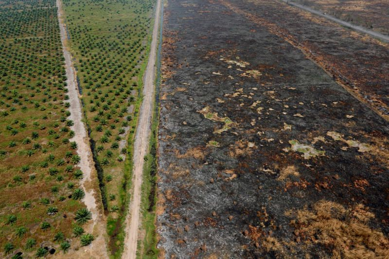 Burnt woodland is pictured next to a palm oil plantation following fires near Banjarmasin in South Kalimantan province on Sept 29, 2019. - Reuters