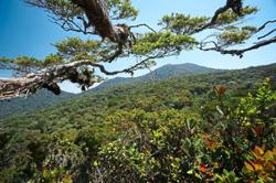 Showcasing uniqueness, benefits of tropical forests