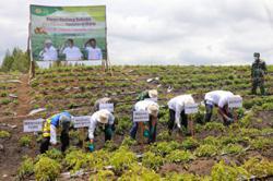 North Sumatra food estate sees first harvests