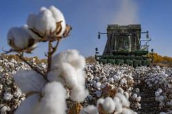 Boycott of China cotton set to severely harm global supply chain