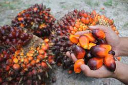 Red palm oil can enter China