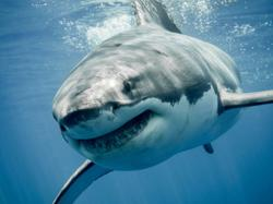 Electronic shark deterrents can save lives (of sharks too)