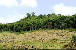 Lao govt issues notice suspending certification of forest areas