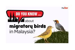 Do you know... about migratory birds in Malaysia?