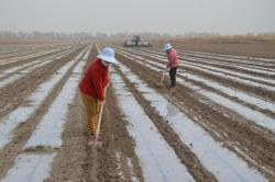 Chinese consumers voice support for Xinjiang cotton to refute accusations