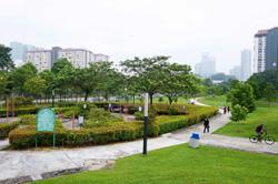 100 trees planted in urban forest