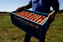 Malaysian government in no hurry to resume exporting eggs to Singapore, says Minister