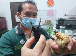 Research into Malaysian beetles stopped due to lack of funding