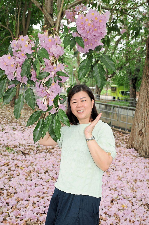 Low posing under Tecoma blooms in Jalan Stadium.