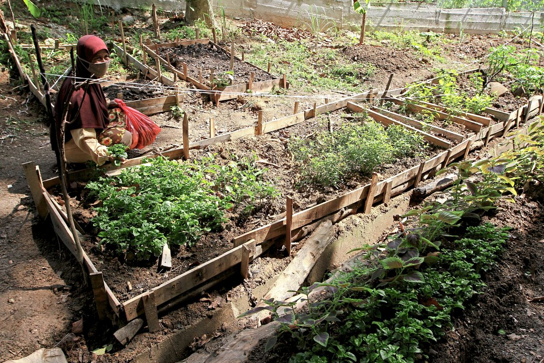 Sabariah, a school bus driver, working on her vegetable garden.