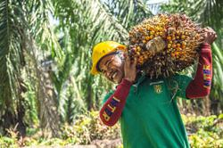 MPOC: Moderate recovery seen for Malaysia's palm oil exports in 2021