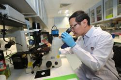 Singapore researchers use AI to identify the pH of cancer cells
