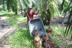 Tight supply of palm oil seen to keep CPO prices up