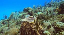 Climate change shrinks marine life richness near equator - study