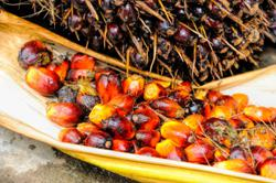 Sri Lanka palm oil ban won't affect Malaysia's commodity market