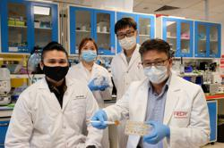 Singapore varsity and S.Korean researchers create eco-friendly pollen sponge to tackle oil spills
