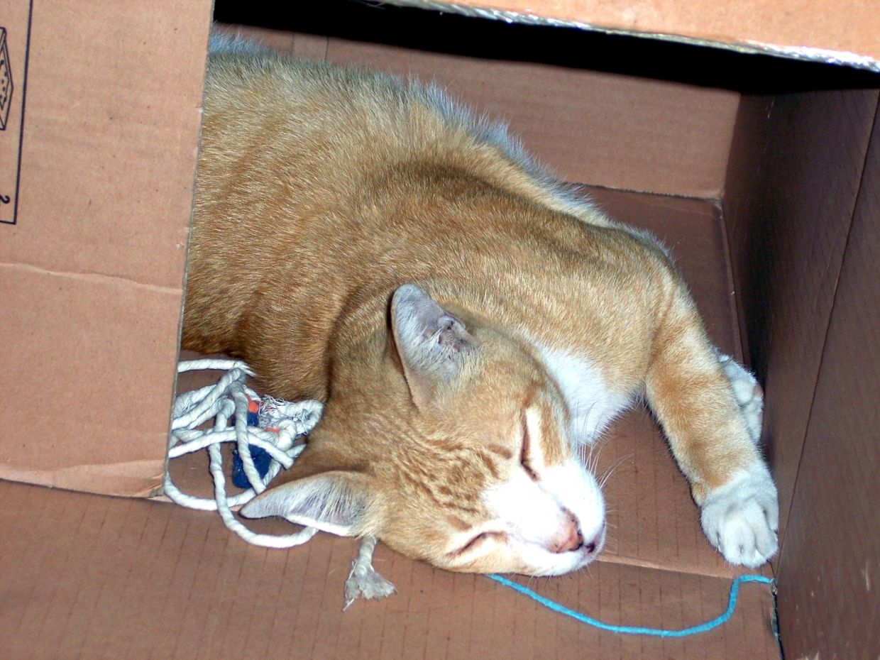 Felines have a thing for cardboard boxes but may appreciate a cushion or pet bed. Photo: Filepic