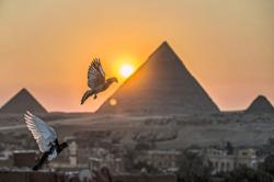 Passion for pigeons persists in Arab world