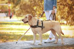 Robotic dog to guide the blind and visually impaired