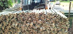 Bamboo sellers seeing growth in sales