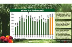 CPO prices seen to be firmer