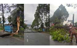 Trees uprooted in storm over Ipoh