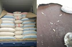 Johor Maqis seizes 26 tonnes of maggot-infested cocoa beans
