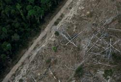 Brazil must cut deforestation 15-20% a year to eliminate it by 2030, says vice-president