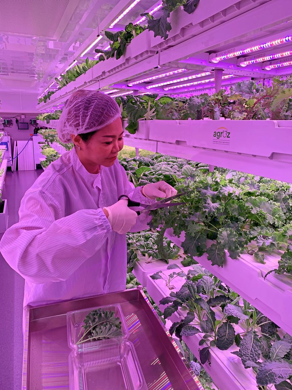 The agriculture industry must embrace technology such as IoT, AI and big data for future food security. (Agroz Indoor Vertical Farm)