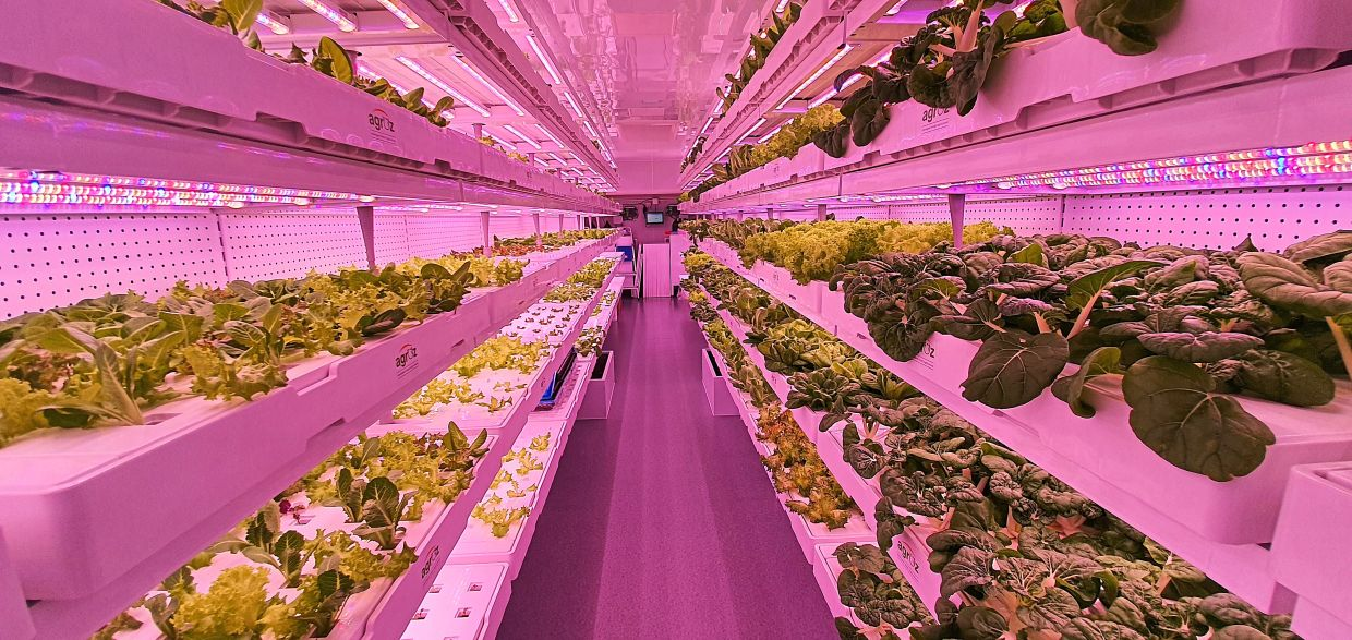 Moving forward: The agriculture industry must embrace technology such as IoT, AI and big data for future food security. — Agroz Indoor Vertical Farm