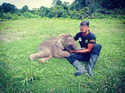 Keep pygmy elephants from meeting rhino's fate